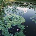 亞洲大學的睡蓮池
