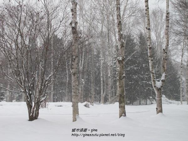 IMG_0905.JPG