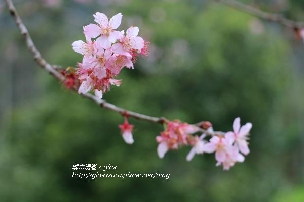 IMG_4626.JPG