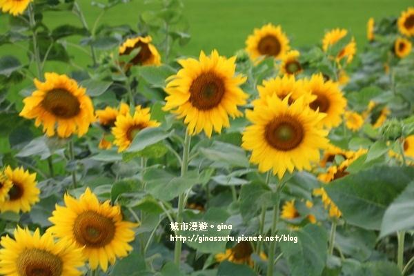 IMG_5292.JPG