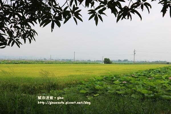 IMG_7202.JPG