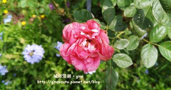 IMG_20170930_104436.jpg
