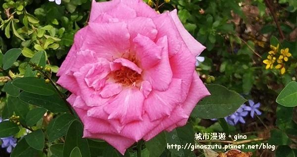 IMG_20170930_104525.jpg