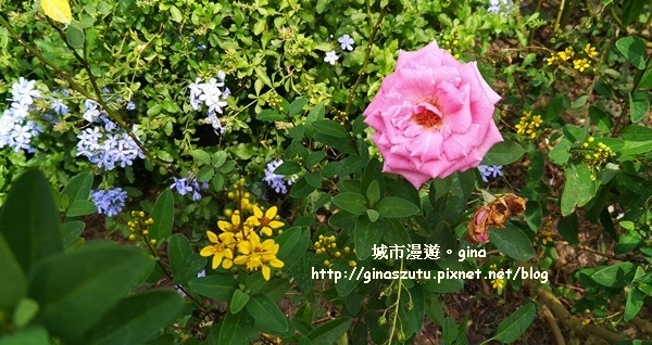 IMG_20170930_104521.jpg