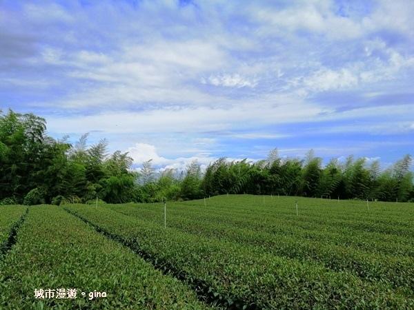 【雲林。古坑】360度環景好視野。雲嶺之丘x杉木林步道