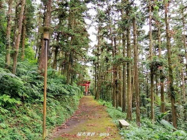 【苗栗。頭屋】悠悠古道森林浴。 鳴鳳山遊憩區