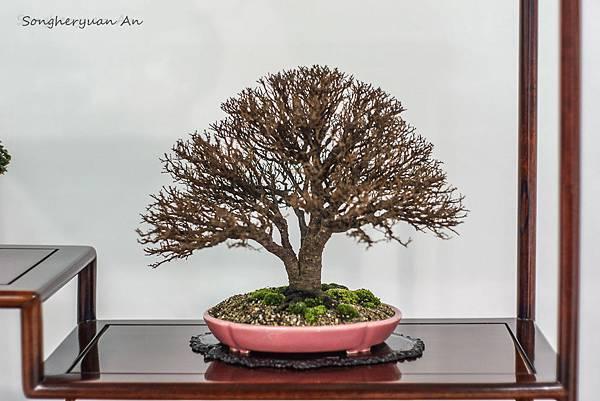 2013 華風獎 小品成組 - 欅
