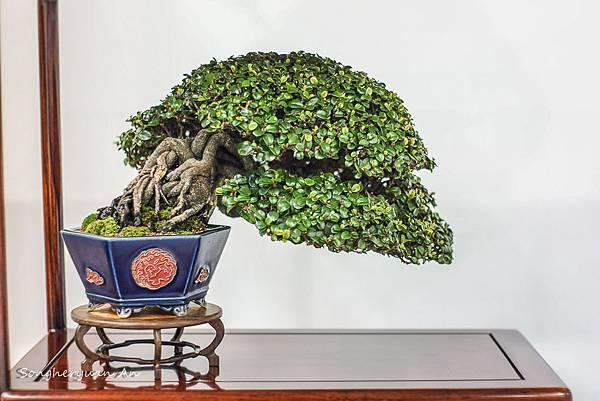 2013 華風獎 小品成組- 翠米茶