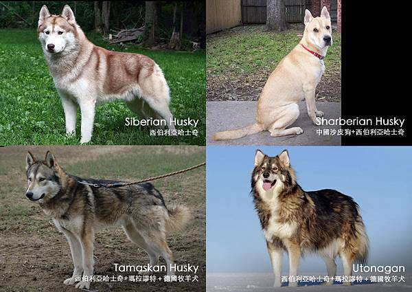 Comparing_Husky.jpg