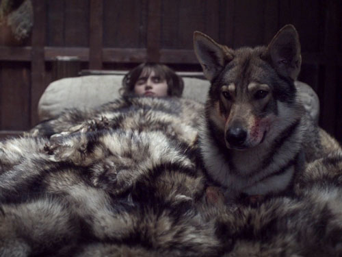 Game Of The Throne Wolf