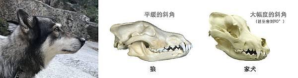 WolfDog_Skull.jpg