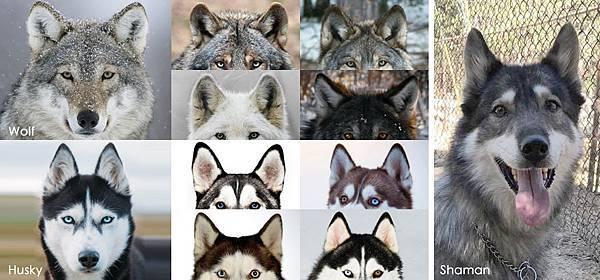 WolfEar.jpg