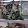 新宿某家寵物店