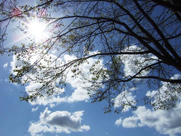 天空太陽雲和樹