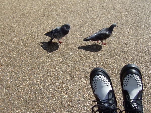 兒子的腳和兩隻笨鴿子