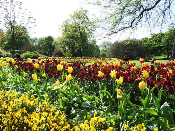 黃色的鬱金香和其他的花