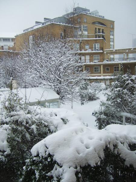 難得的雪景