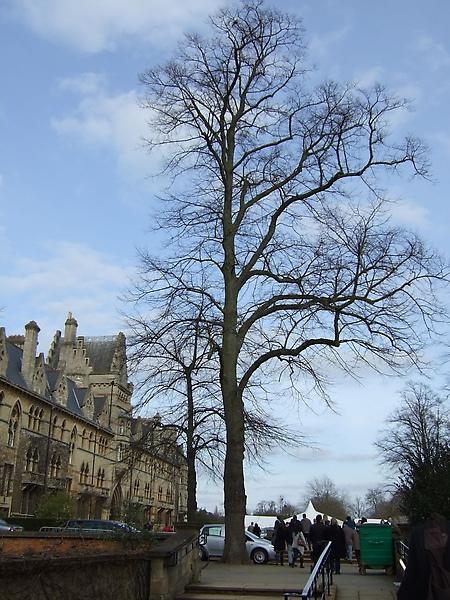 大樹兒和校區