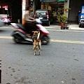 Happy跑到馬路上