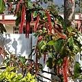 吃飽到處逛逛拍到的可愛植物