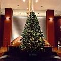應景的聖誕樹