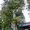 高大的樹XD