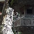 石燈籠和樹