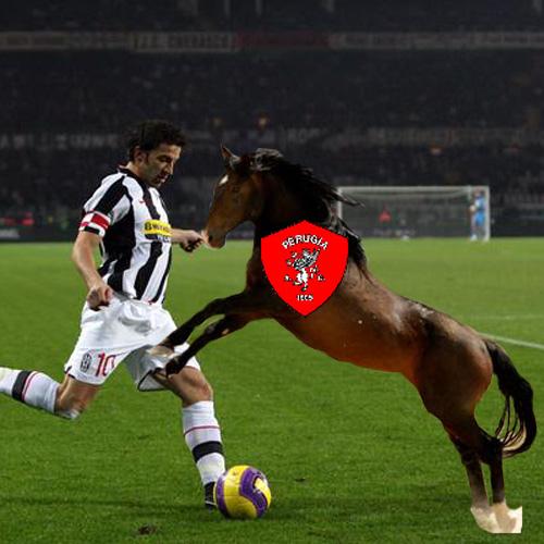 馬可以踢義甲?