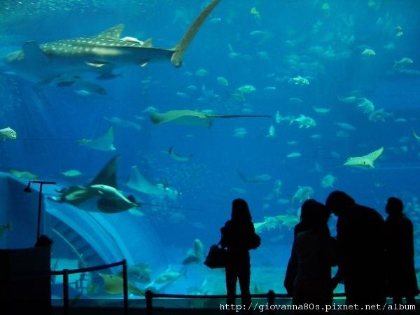 沖繩海洋博物館