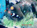 水族缸.jpg