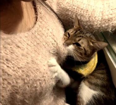 色貓咪 躺正妹胸