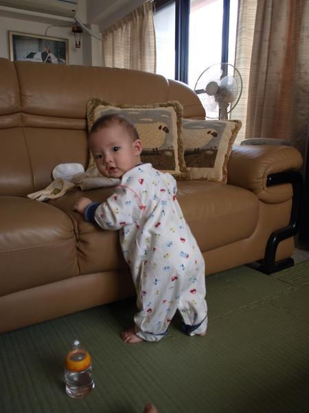 很愛爬沙發,被我逮到