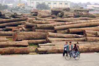 中國伐木.jpg