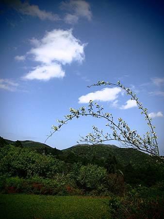 陽明山東段縱走 (2)