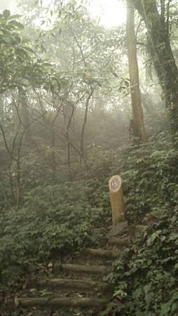 聖母山莊登山步道1K
