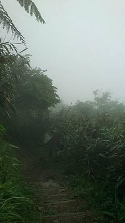 聖母山莊登山步道 (7)