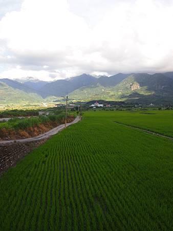 台東平原 (4)