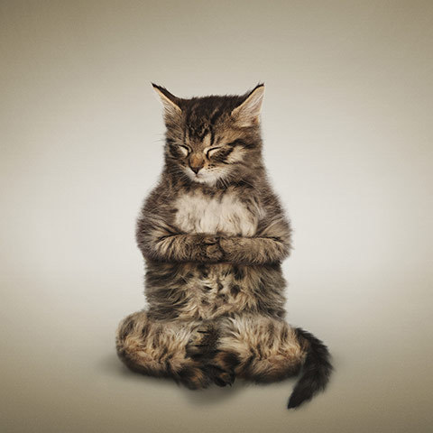 小貓冥想式