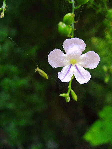 細緻小花.JPG