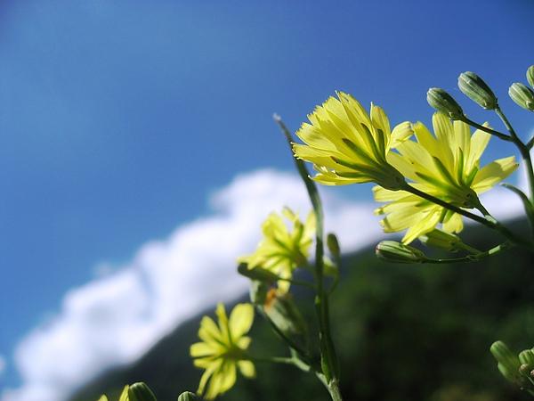 太魯閣的小野花.JPG