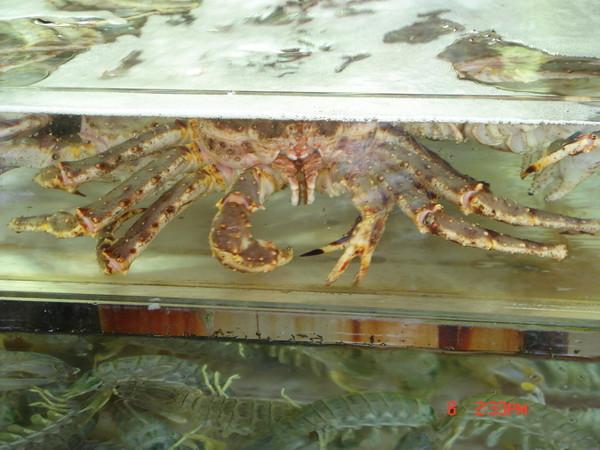 感覺很像北海道螃蟹...也不知道是不是?