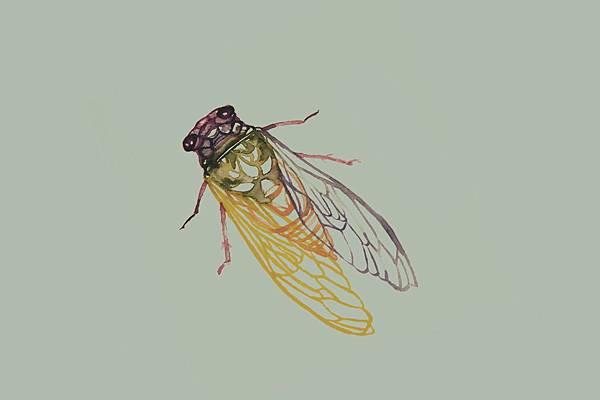 Cicada 封底的蟬 長方形.jpg