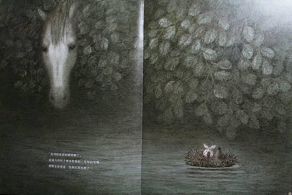 霧中的刺蝟08.JPG