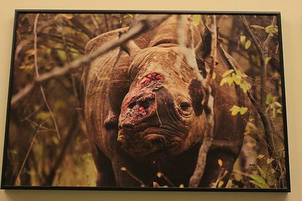 2012世界新聞攝影展17