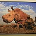 2012世界新聞攝影展18