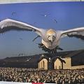 2011新聞攝影展13.jpg