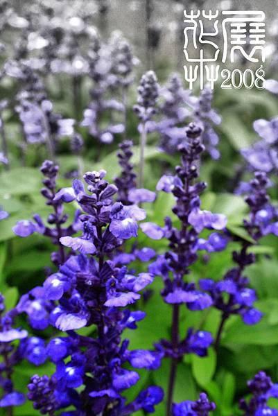 花卉展04.jpg