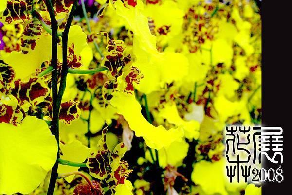 花卉展05.jpg