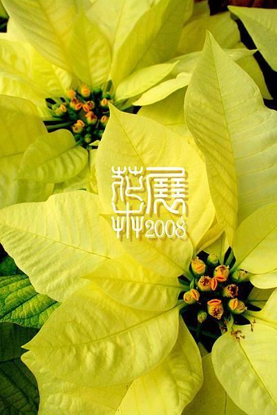 花卉展08.jpg