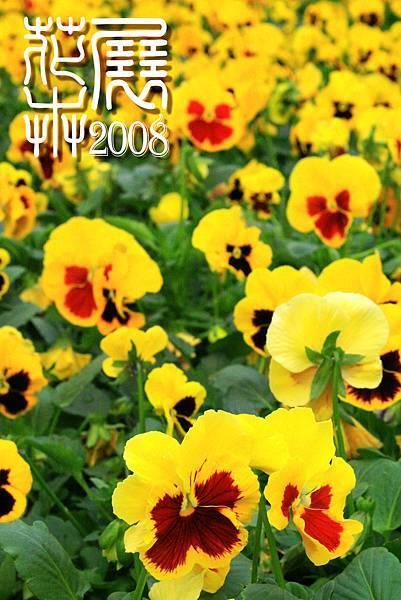 花卉展09.jpg